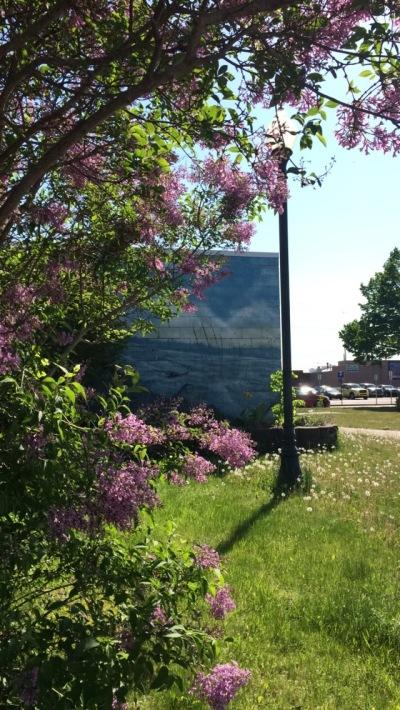 Lovely park, lovely flowers.